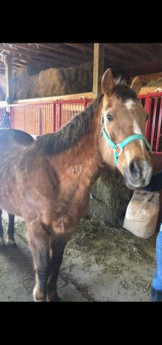 American Quarter Horse Horses for sale in Wellington, OH 44090, USA. price 1600USD