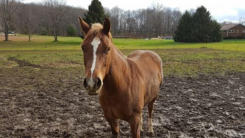 Grade Horse Horses for sale in East Canton, OH 44730, USA. price 800USD