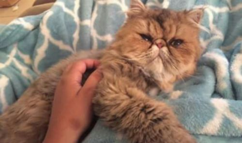 Persian Cats for sale in West Palm Beach, FL 33401, USA. price 400USD